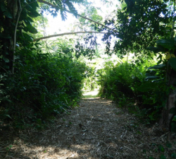walking-path-view