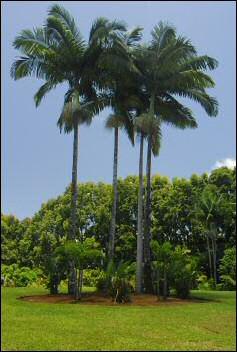 majestic_palms