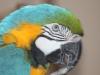AF_IMG_0143_bird1