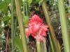 AF_IMG_9977_flower