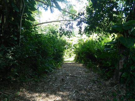 walking-path-view